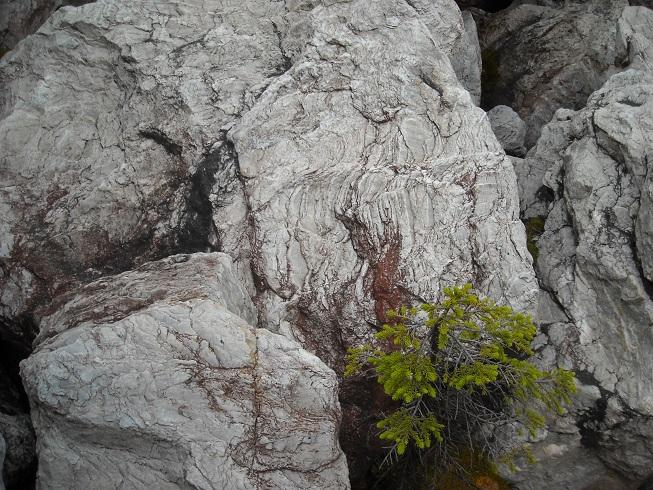 камень на сопке с серебром