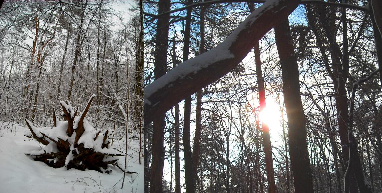 по зимнему лесу Волхвов