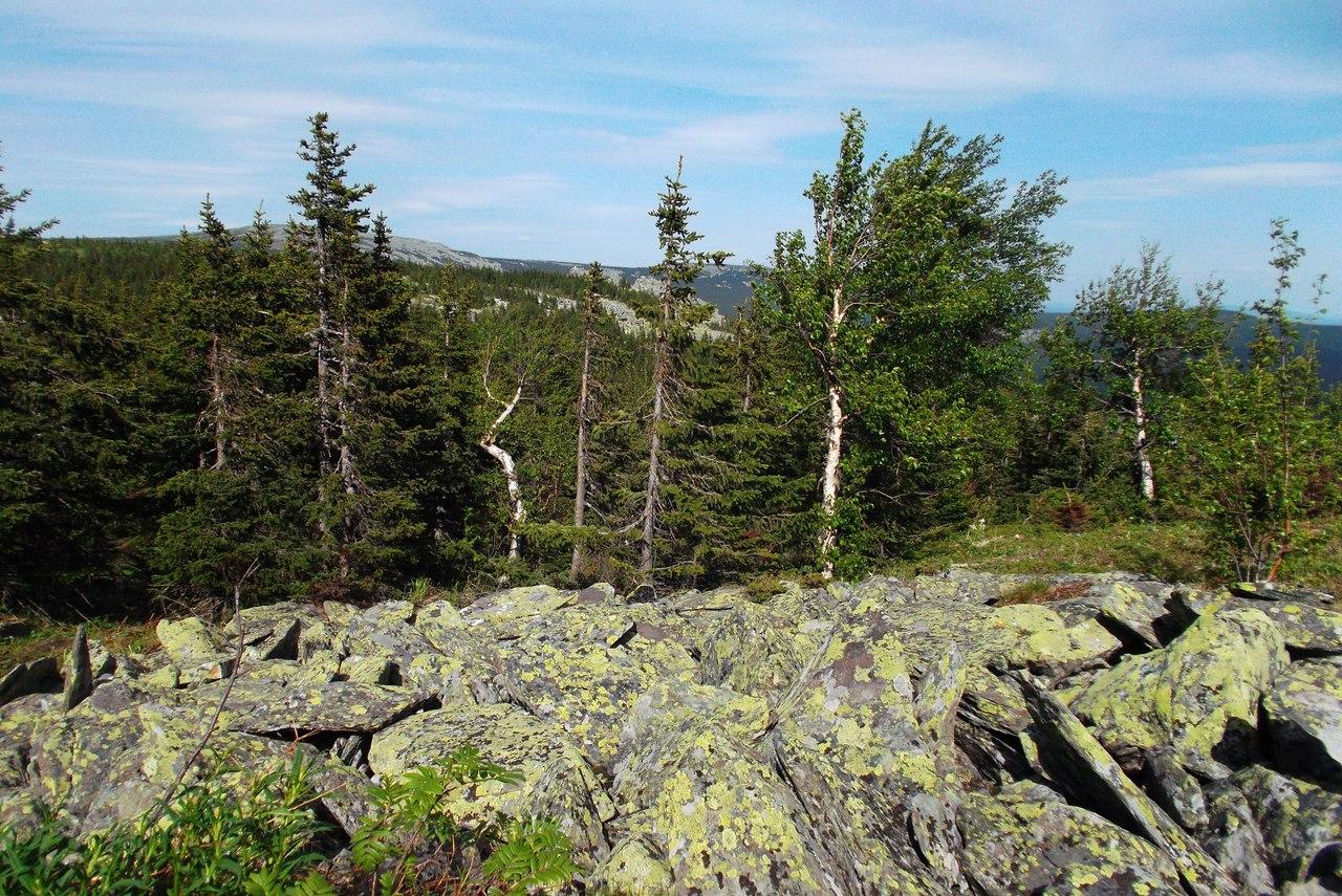 лес и курумник