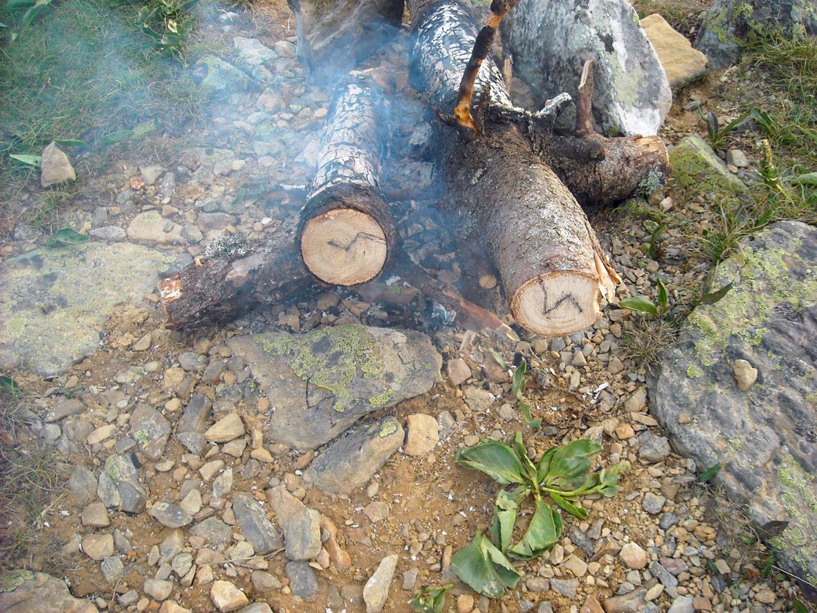 руна соул на срезе дерева